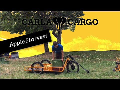 apple-harvest-(140kg)-child's-play-with-the-all-rounder-cargo-trailer-of-carla-cargo