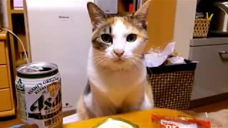さりげなくカニ缶を引き寄せる猫 Cat to draw canned crab to casually