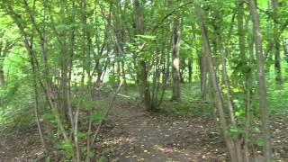 Австрия Вена Венский лес(Место, где любил отдыхать Бетховен. Экскурсии в Вене и по Австрии от компании