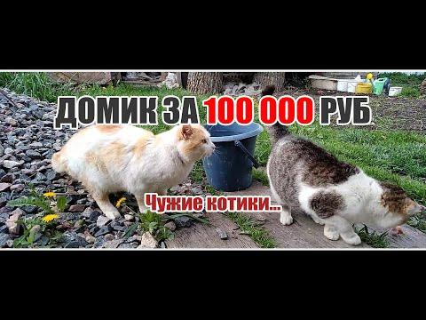видео: Домик за 100 000 руб // Чужие котики