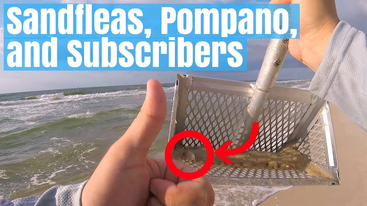 Fishing with Sand Fleas for Pompano - Surf Fishing Gulf Shores