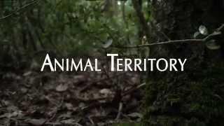 Animal Territory Teaser
