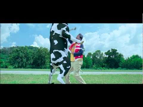Crazy Cow Fight