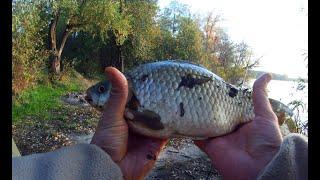 Не рыбалка а СКАЗКА Крупный карась лещ сазан