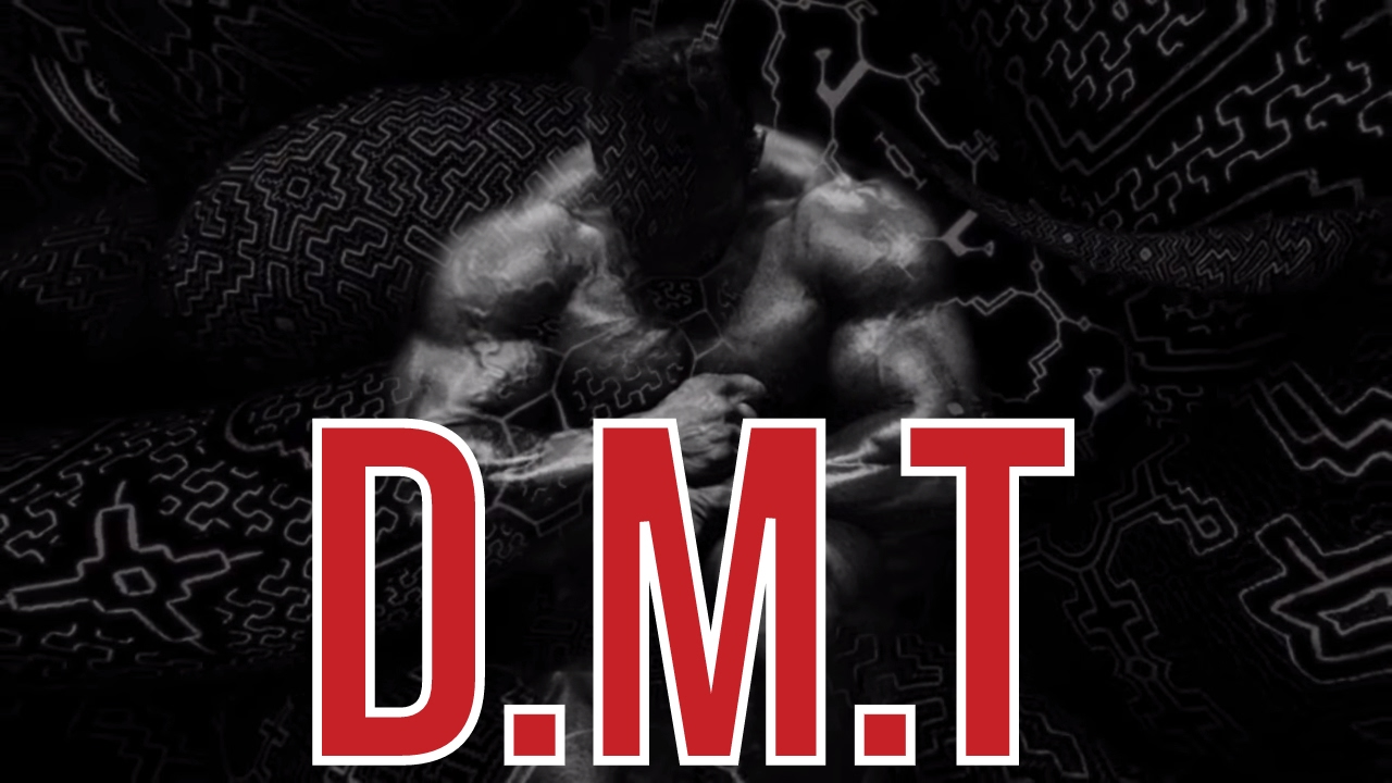Download DMT SHOWED ME THE TRUE NATURE OF REALITY | Dorian Yates on psychedelic drugs | London Real