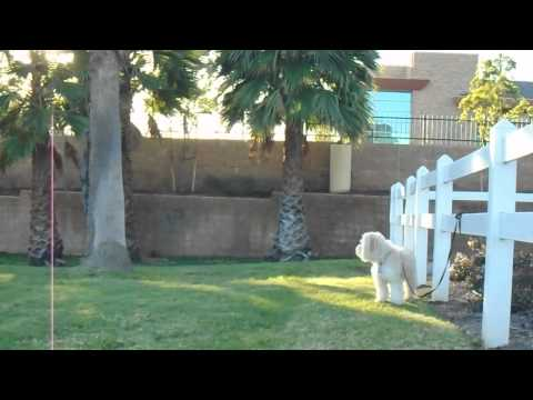 sirius-k9-academy-intermediate-obedience-test-exercise---stand-stay-(out-of-site)