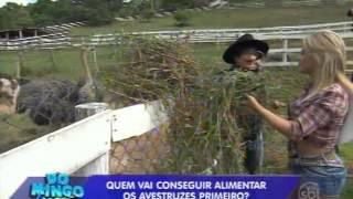 Domingo Legal (20/04/14) - Pavorô e Babi vão à fazenda de Santos