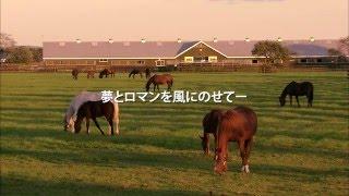北海道日高町 紹介映像 軽種馬編「優駿のふるさと 日高」
