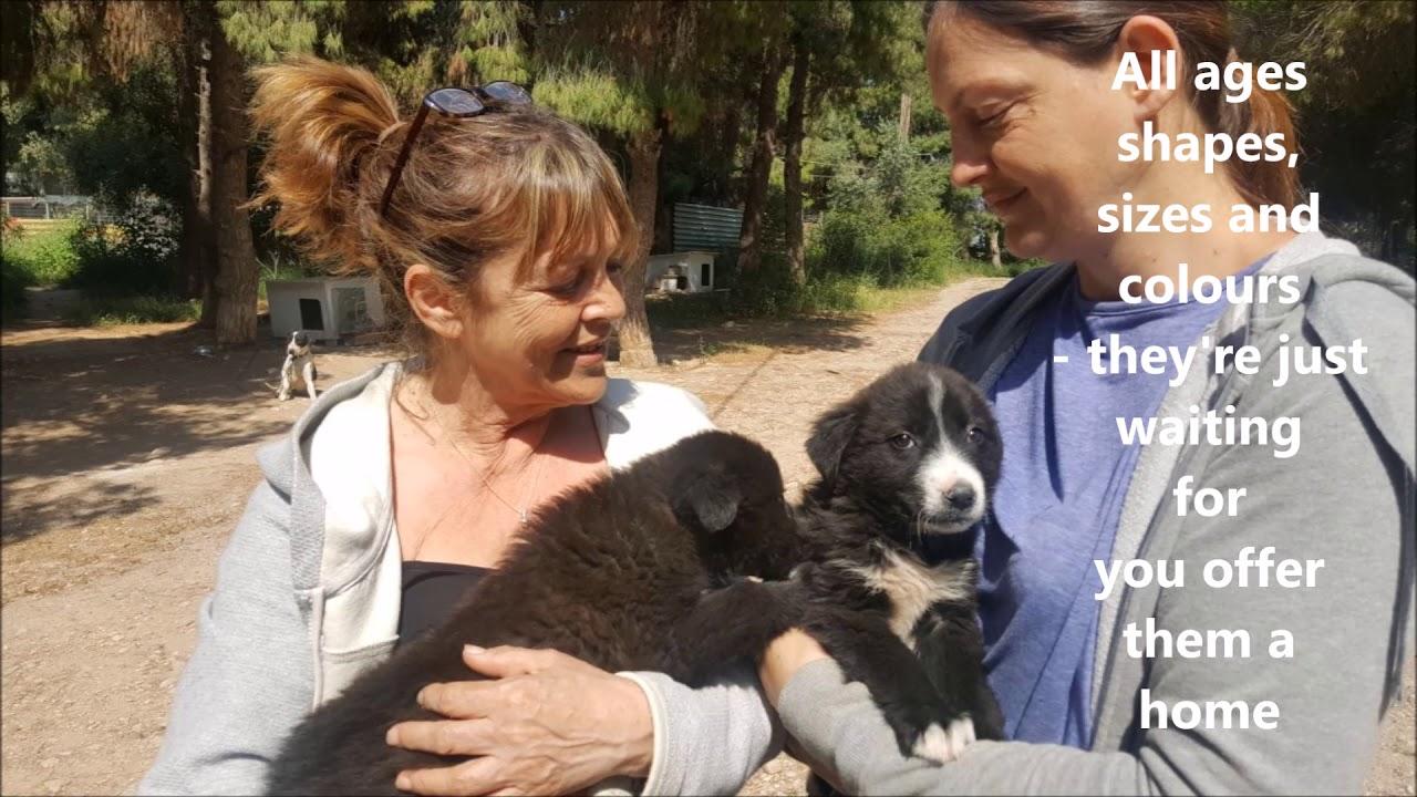 www desperategreekiesdogrescue com, Dog rescue  - Dogs for