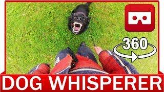 360° VR VIDEO - German Shepherd   Agility Training Dog Whisperer  - VIRTUAL REALITY