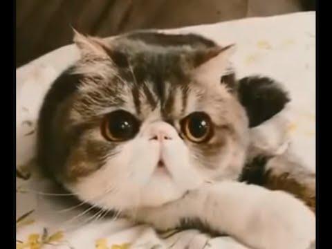 Хитрый Свин – приколы с кошками (Самые смешные коты и самые смешные кошки приколы). Funny cats