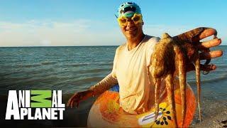 animales-que-te-puedes-encontrar-bajo-el-agua-wild-frank-en-mxico-animal-planet