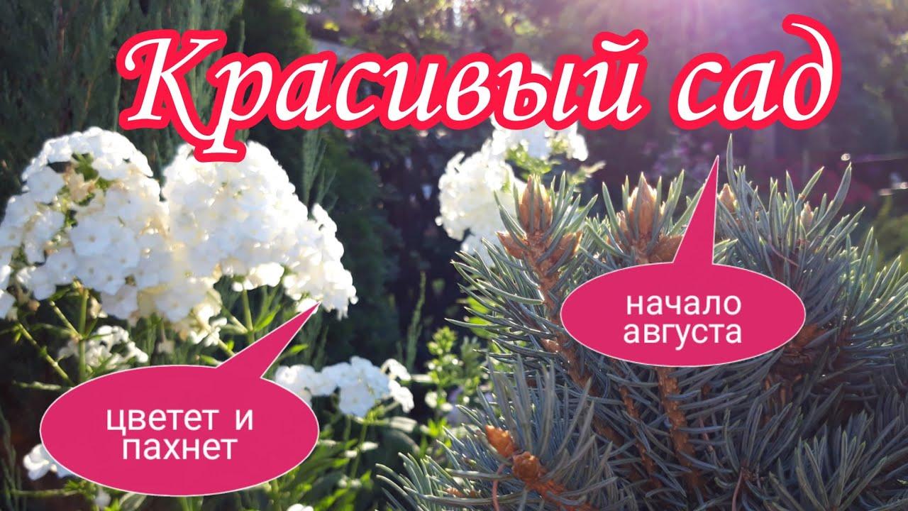 Красивый сад.Цветет и пахнет.Начало августа.Красивые цветники своими руками. ДАЧАЛАНДШАФТНЫЙ ДИЗАЙН