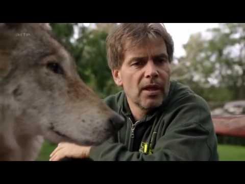 Loups solitaires en toute liberté DOC FRENCH