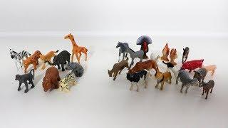 Учим животных и их звуки. Домашние и дикие животные. Звуки животных  教動物和他們的聲音