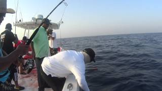Shimano Stella 6000 Vs Yellowfin Tuna 1
