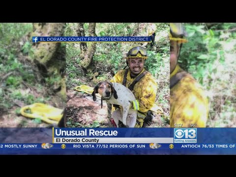Firefighters Save Dog From 50-Foot Mine Shaft