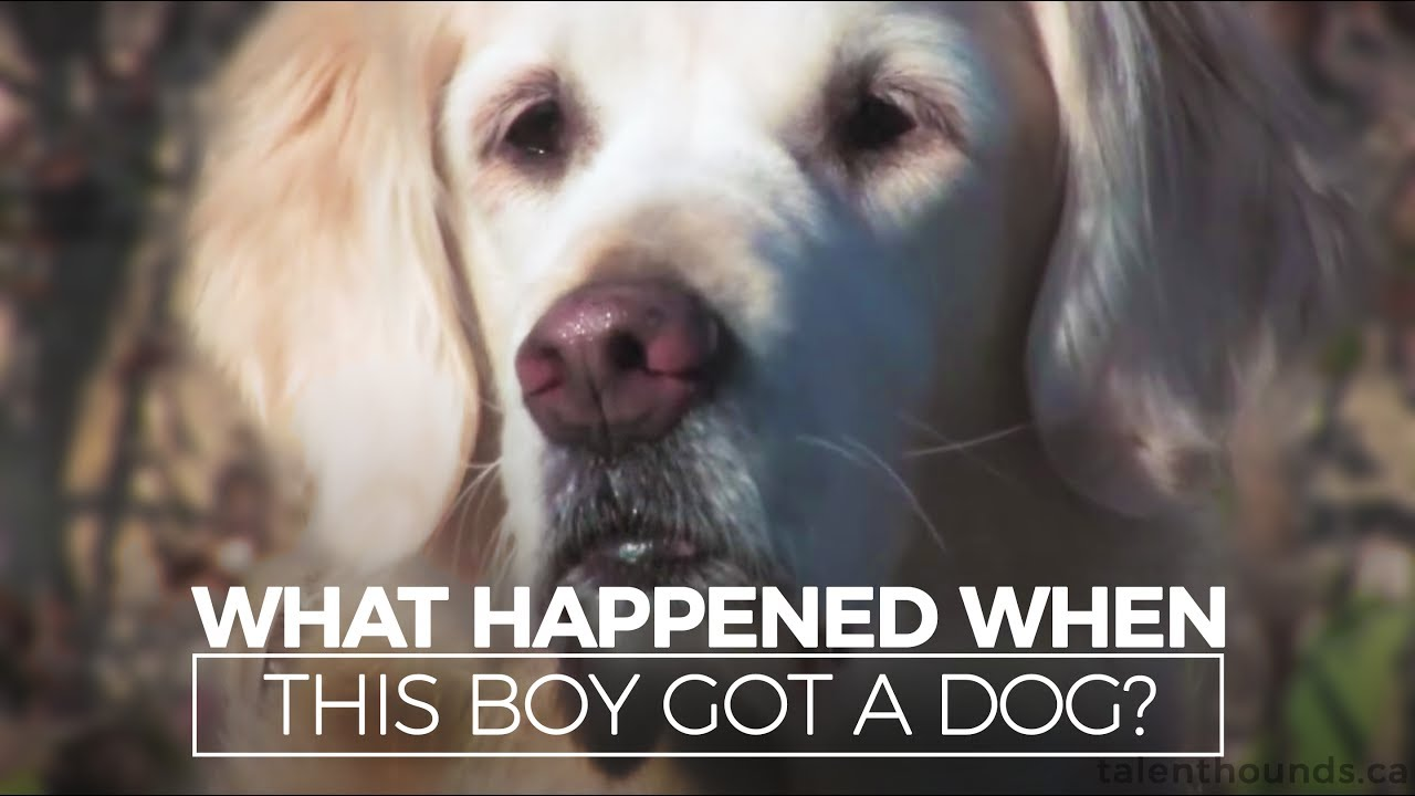 What Happened When This Autistic Boy Got A Dog YouTube - One boy dog heart warming