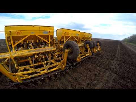 Выращивание донника желтого на семена - Донник