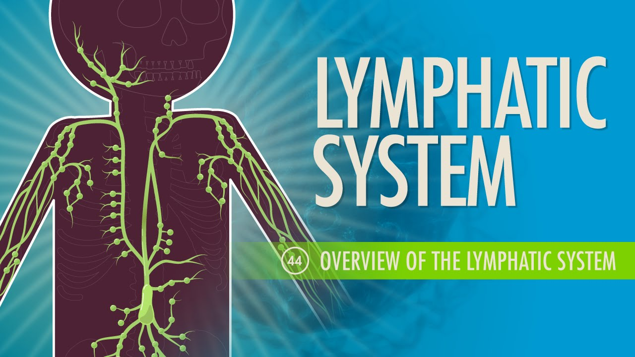 Lymphatic System: Crash Course A&P #44 - YouTube