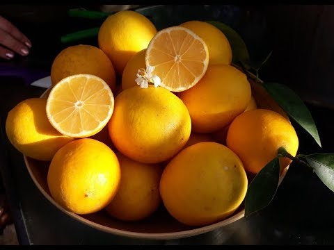 Лимон Мейера.  Лимо́н Ме́йера (лат. Cítrus × méyerii)
