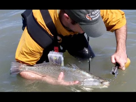 Winter Fishing the Middle/Upper Texas Coast for Trout and Redfish
