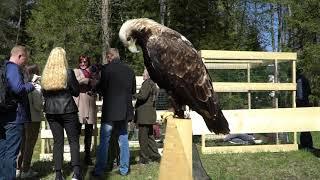 Орел могильник на  фотосессию 8 965 380 13 11