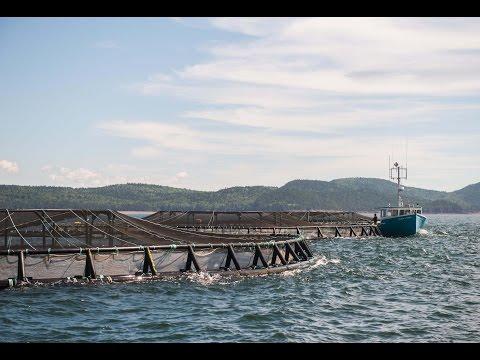 Gray Aqua Industry Spotlight - Pentair AES