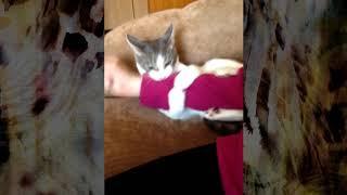 🤩 Satisfaction. Новый клип на известную песню Benny Benassi от кота Боно.