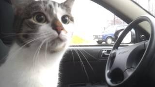Кошка в машине)))