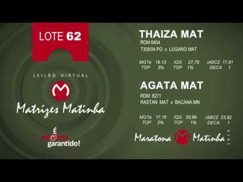 LOTE 62 Matrizes Matinha 2019