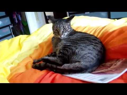 أكثر قطة مجنونة بالعالم-Crazy Cat
