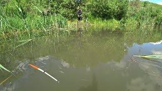 Положил поплавок Крупный Карась Рыбалка на маховую удочку