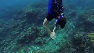 Swimming With Dolphins In Mauritius GoPro HD