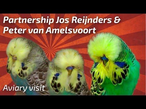 Partnership Jos Reijnders & Peter van Amelsvoort |Netherlands| 1/2017 [Budgie Planet]