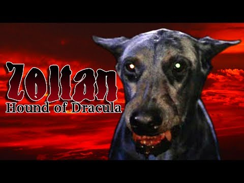 Bad Movie Review: Zoltan: Hound of Dracula: Review - YouTube