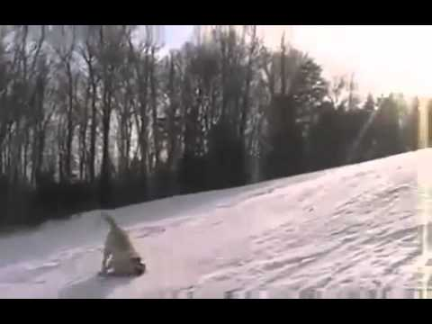 Ronald Kenney The True Meaning of Dogsledding