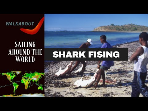 Shark Fishing in Mitsio Madagascar