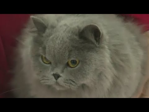 International Cat Show comes to Portland