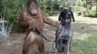Смешные картинки с животными! - Fun photo animals