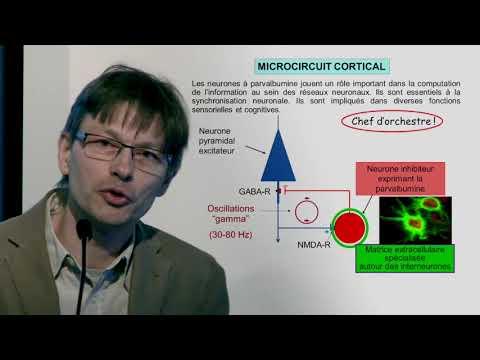 SGlutamate, neuroinflammation, stress oxydatif au coeur de la schizophrenie?  P. Steullet
