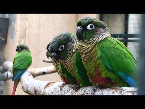 Cute Senegal Parrots From A Zoo in Turkey