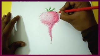 How to Draw a Beetroot Step by Step