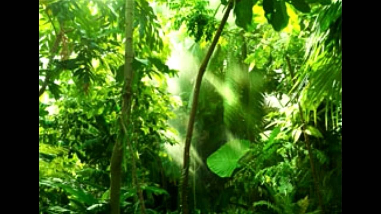 Rainforest Biome Tropical Rainforest Plants - YouTube