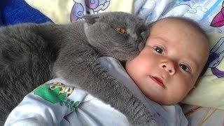 Gatos Protegiendo Bebés.!! Los Gatos Aman a los Bebés 😺👶