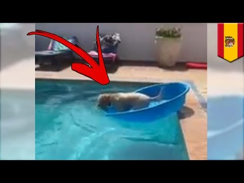 Smart dog! How to get your ball out of the water without getting wet - TomoNews