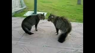 страшные коты