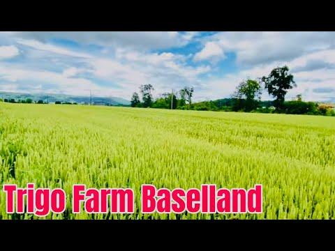 Download #SwissView #Top view 2021 Trigo/ 🌾 Frenkendorf  Basellandschaft