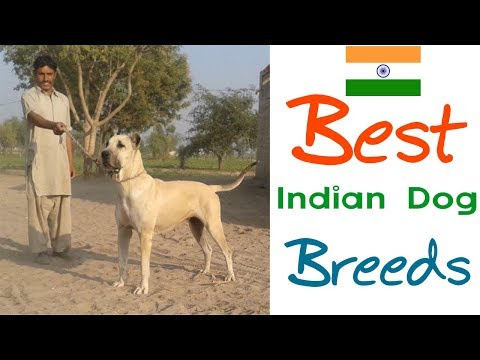 Top 5 Great Indian Dog Breeds | #BestBreedsFromIndia | Part-1