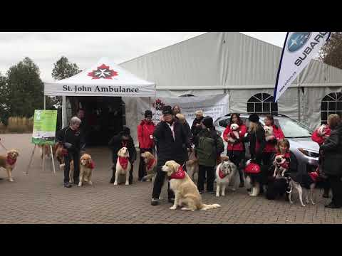 Putts4Mutts - Therapy Dog Photo - Fundraise Event by St. John Ambulance, York Region